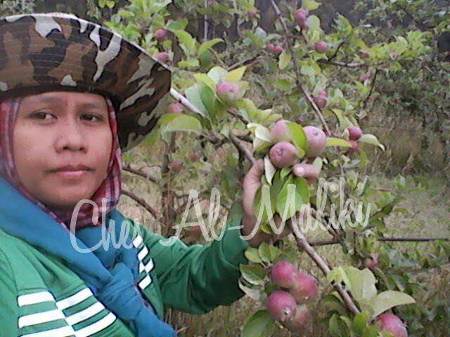 Wanita Ini Dedah Hakikat Sebenar, 3 Tahun Pengalaman Menjadi Pekerja Ladang Di Australia