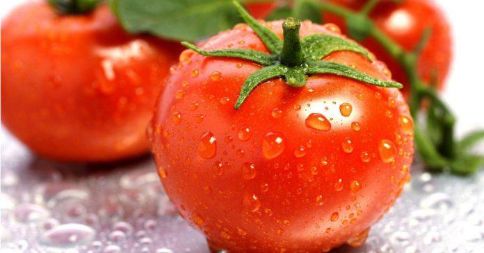 Ada Apa Dengan Tomato?
