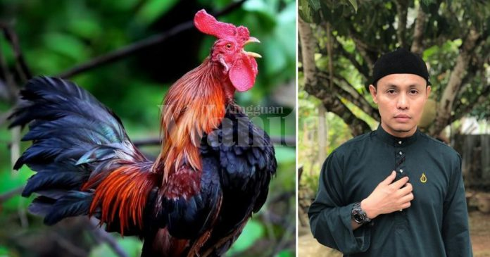 Tak Wajib, Tapi Hadis Sahih Sebut 'Dituntut Berdoa Ketika Ayam Berkokok'